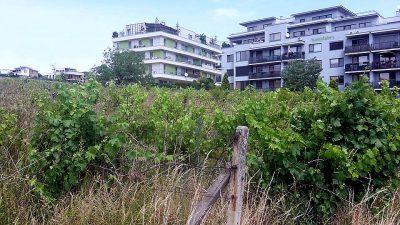 Vinohrady1.jpg